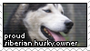 Proud Siberian Husky Owner by sugarpoultry
