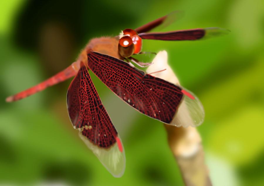 Dragonfly Landing by Dragonflyfaerie