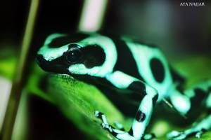 Frog by AyaNajjar