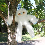 Albino Sloth