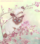 Kitty Blossoms