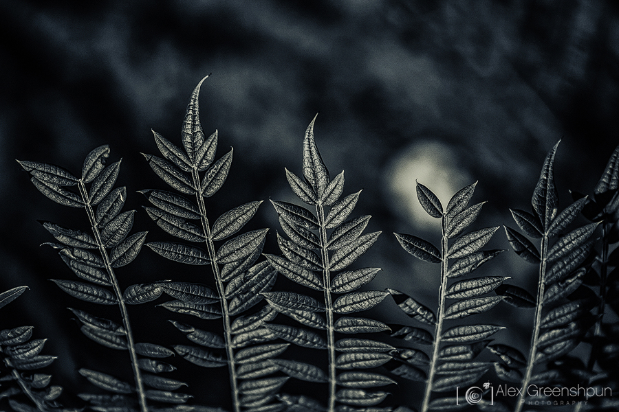 If the Moon Had a Crown by alexgphoto