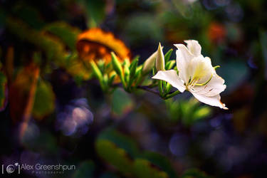 Pure Magic by alexgphoto