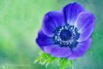 Purple Grandeur