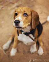Puppy-Dog Eyes a.k.a Pah-leeease?