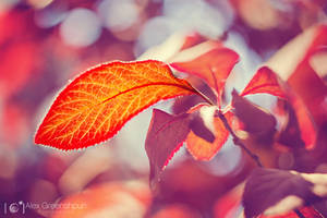 Sunstruck by alexgphoto