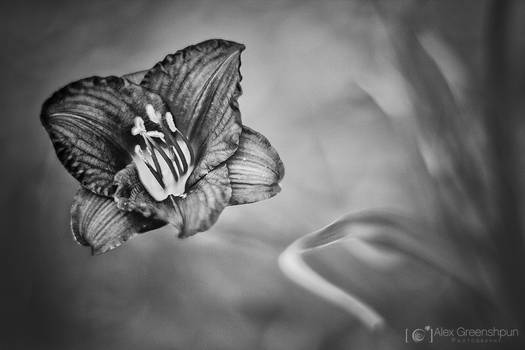 The Flower that Dreamed it was a Butterfly