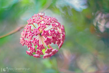 Nature's Disco Ball by alexgphoto