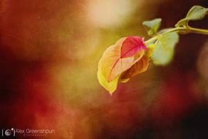 Autumn's Blossoms by alexgphoto