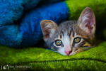 Hello, Kitty by alexgphoto
