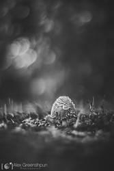 A Child of Rain by alexgphoto