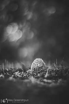 A Child of Rain