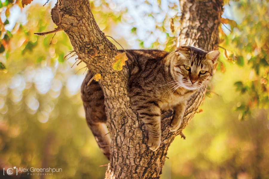 Climb a tree they said... by alexgphoto