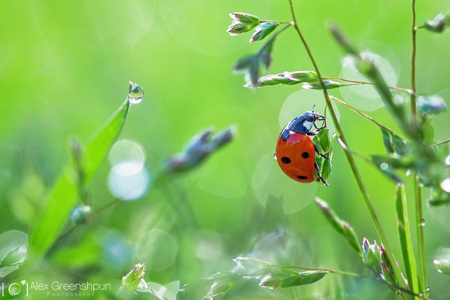 Ladybird by alexgphoto