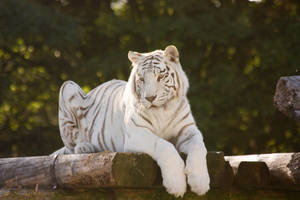 Stukenbrock 14 . Tiger 014 by Dark-Wolfs-Stock