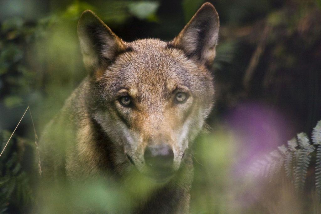 grana 15 wolf 17 by dark wolfs stock on deviantart. Black Bedroom Furniture Sets. Home Design Ideas