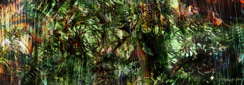 Amazonia by raysheaf