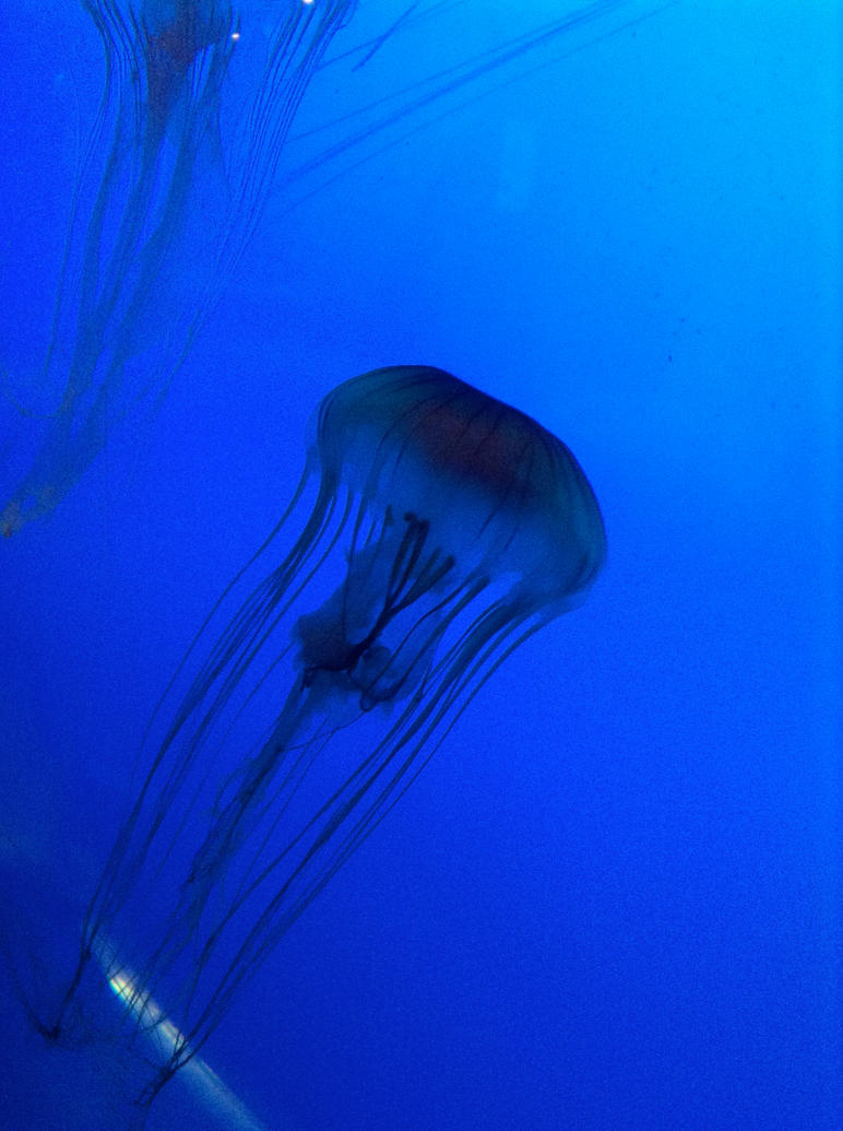 Jelly Fish Blue V by muffla