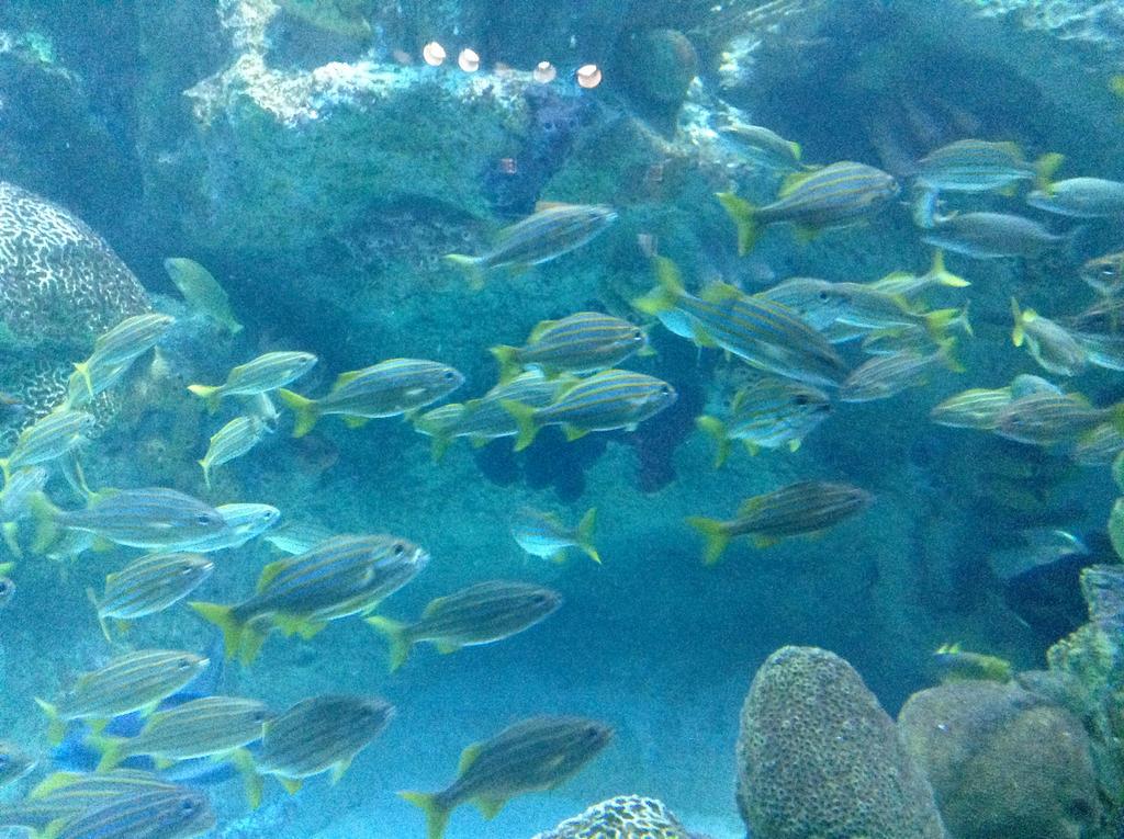 Fish Zoo by muffla