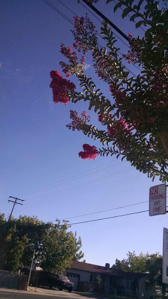 Sacramento by muffla
