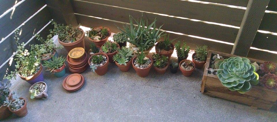 Garden by muffla