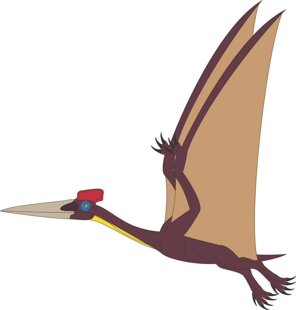 Hatzegopteryx Size Prehistoric Wor...