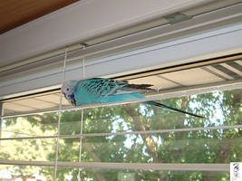 Budgie in the Blinds by The-Dude-L-Bug