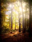 Hercynian Forest