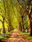 STOCK:Tree lined Path:STOCK