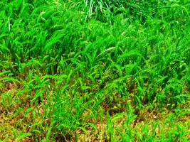 Field Of Green by nitemice