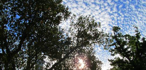 Speckled Sky by nitemice
