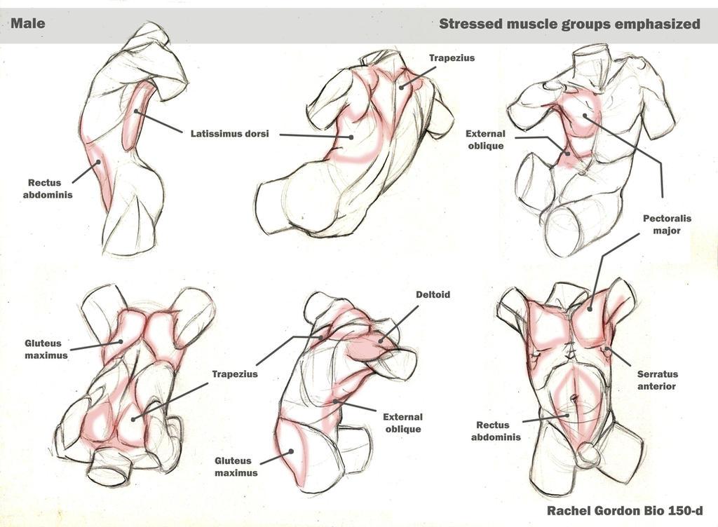 Dynamic torsos, male by ArsonAnthemKJ