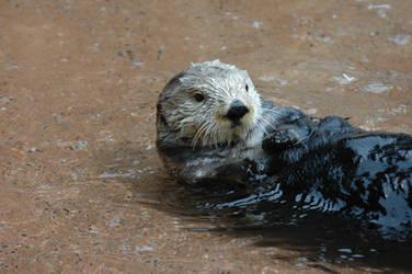 Otter been an otter