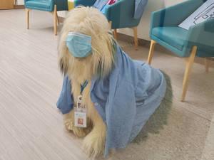 Nurse Scruffy