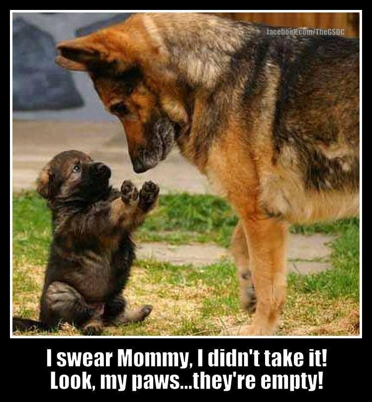 Cute German Shepherd Quotes