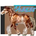 Chazar by AnimalArtKingdom