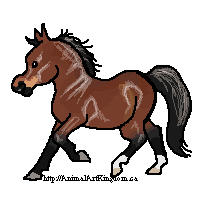Chance Quirk Pony