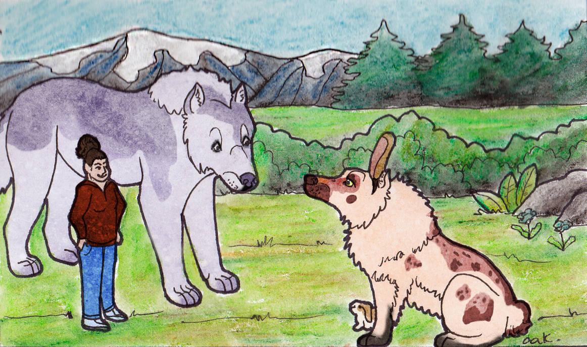 Meeting a.. wild rabbit?