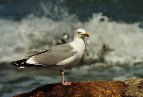 Modeling seagull by bigunknown