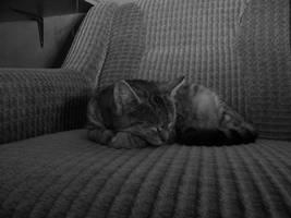 Sweet dreams... by bigunknown