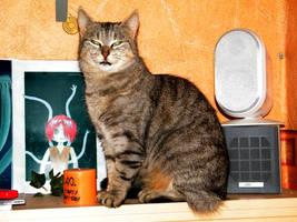 Cat on the wooden DVD shelf by bigunknown