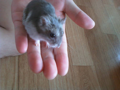 HAMTORY: My old hamster
