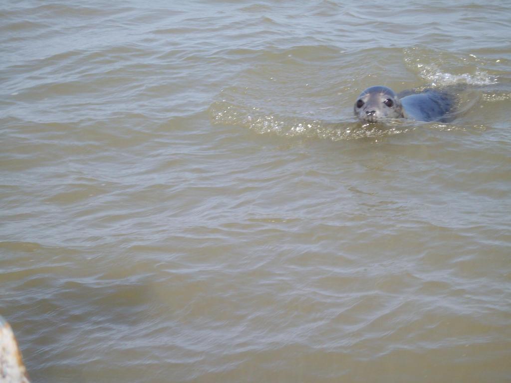 Seal trip by pan77155