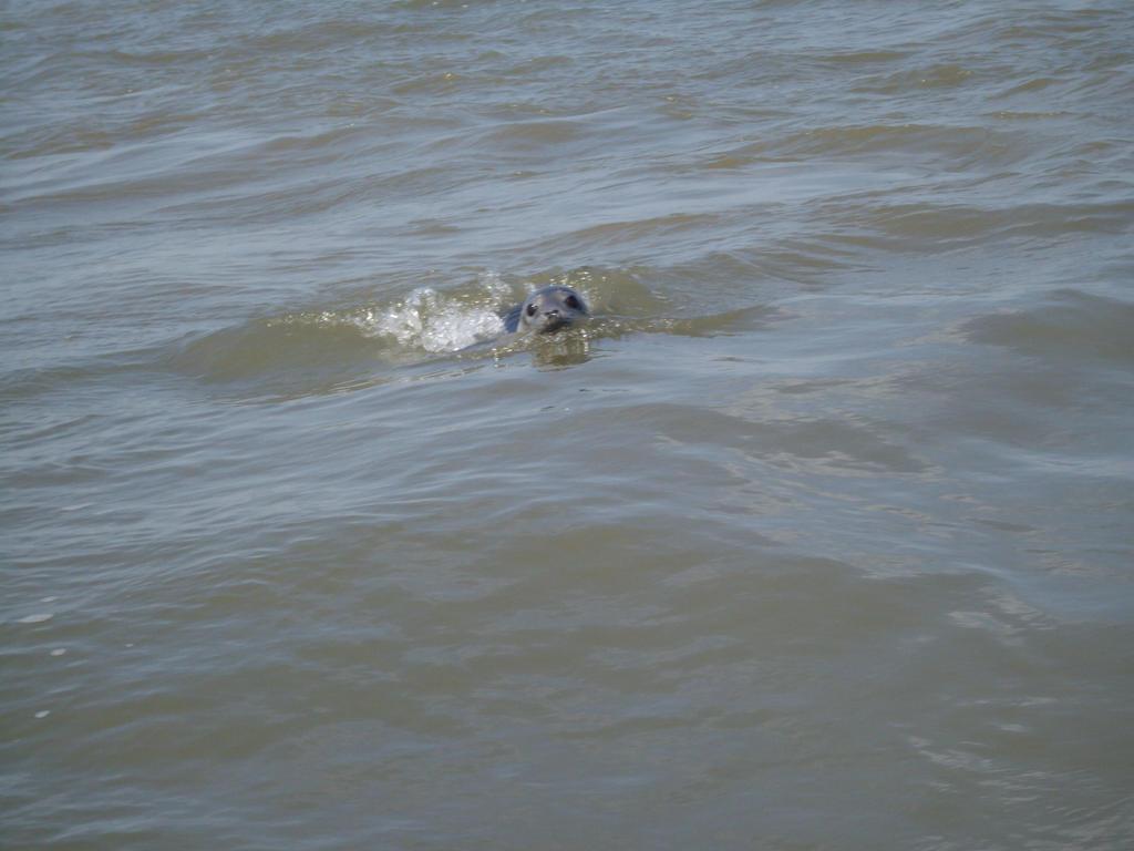 Seal trip 2 by pan77155