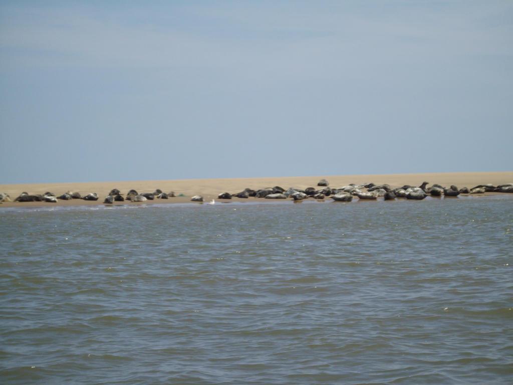 Seal trip 3 by pan77155
