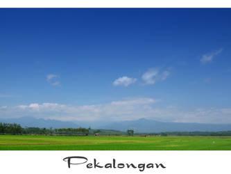 paddy farmer's day by yoxx