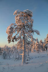 Finland Dec 2016 6 by Personal-Pariah