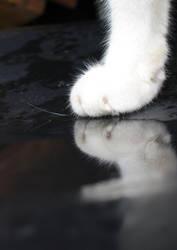 paws.