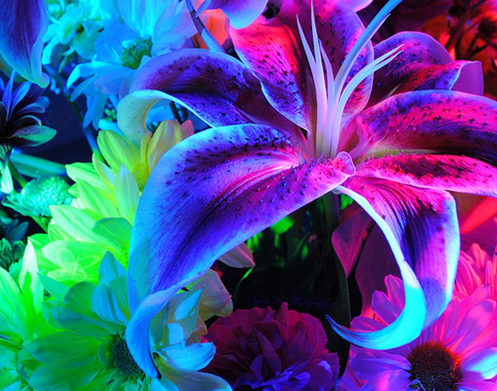 flowers by spiro on deviantart, Beautiful flower