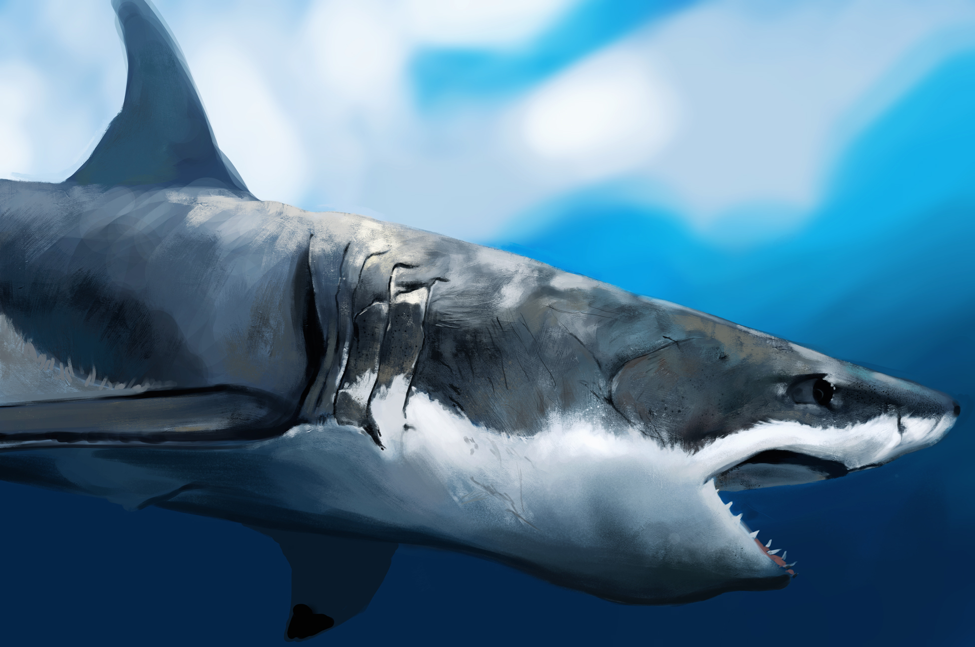 Shark Study by JoshSummana